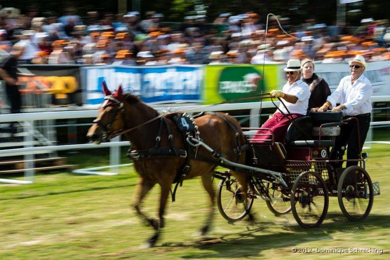 Course de voitures à 4 roues, 1 cheval
