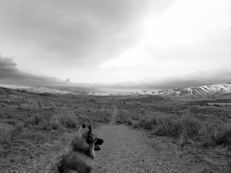 Walking the Doggie at ISU Centennial Cross-Country Course Pocatello P1050051.jpg