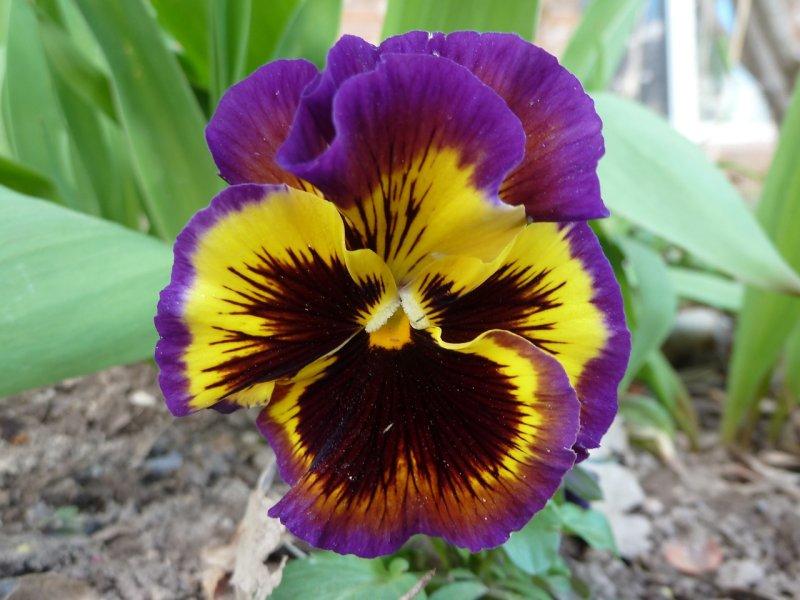 Trimmers flower P1050439.jpg