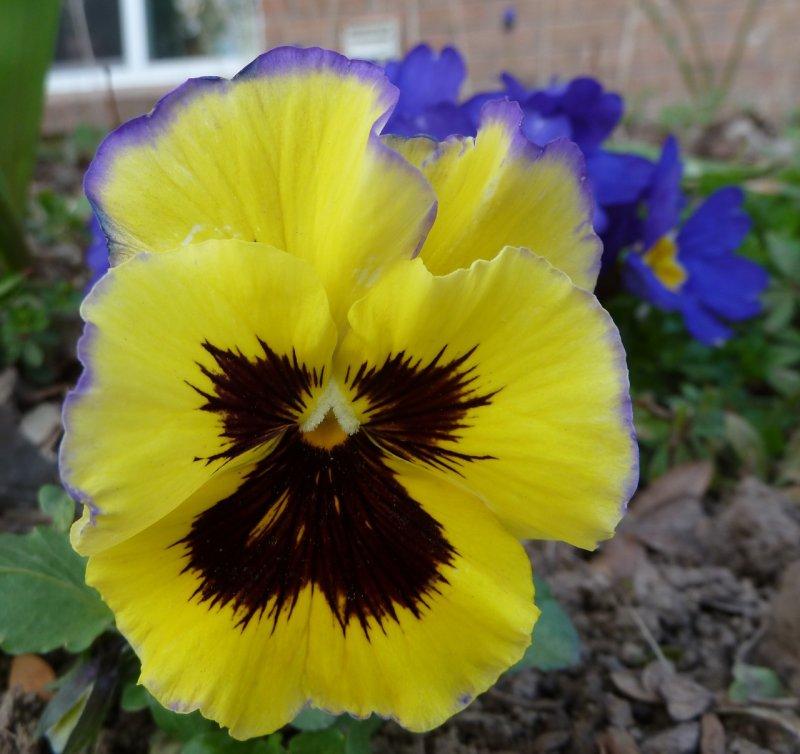 Trimmers flowers P1050435.jpg