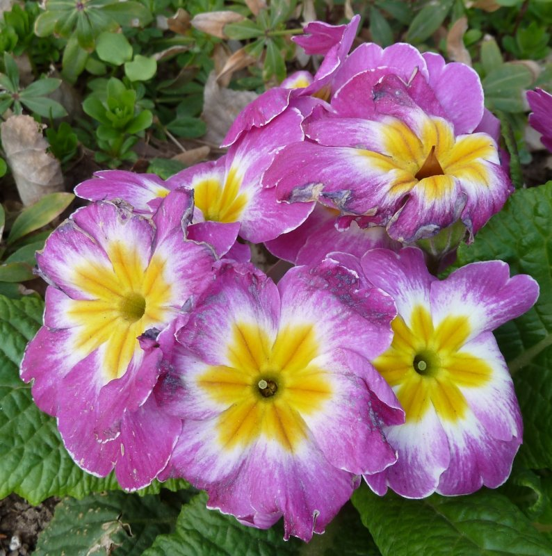 Trimmers flowers P1050441.jpg