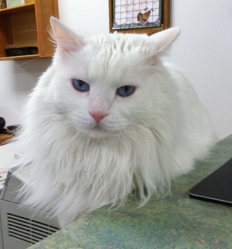 iPhone photo of Alameda Pet Hospital Cat Boo IMG_0033.jpg
