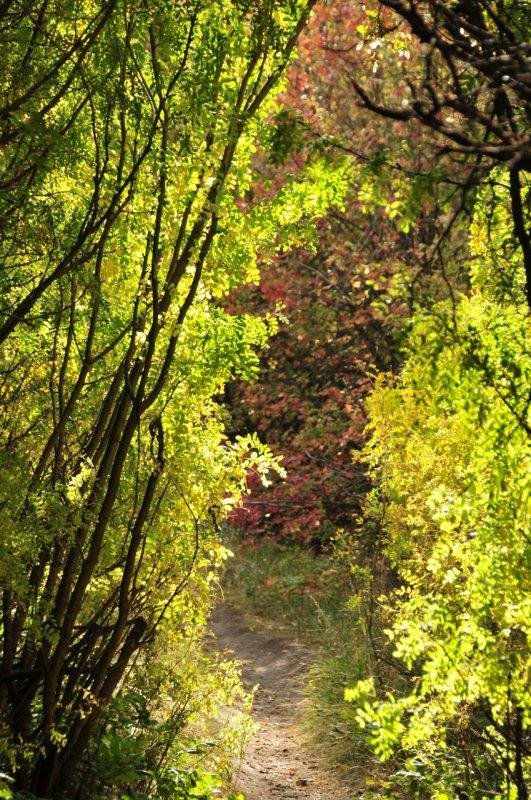 City Creek Trail _DSC1543.jpg
