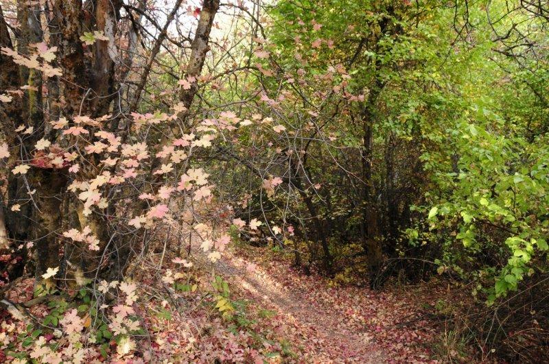 City Creek Trail _DSC1583.jpg