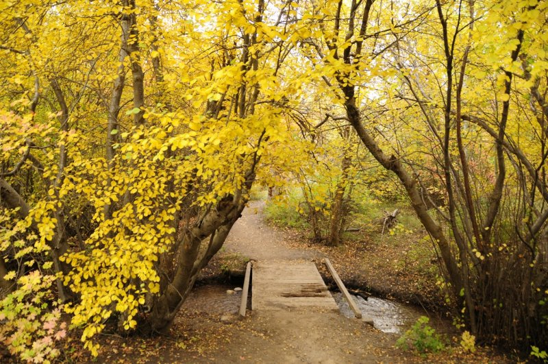 City Creek Autumn Scene with Old Footbridge _DSC1790.jpg