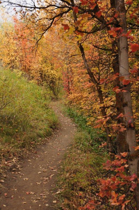City Creek Trail in Autumn _DSC1819.jpg