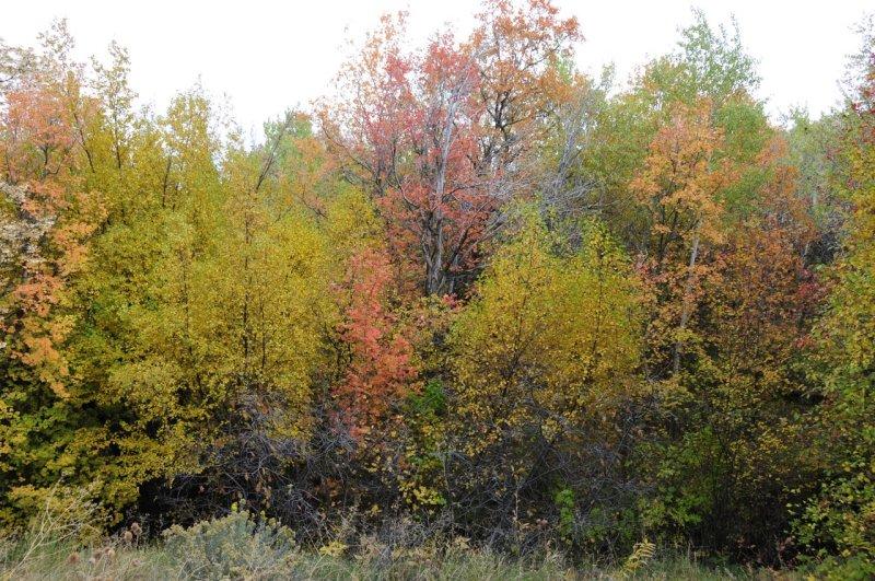 Fall Foliage at City Creek Trail Pocatello _DSC1768.jpg