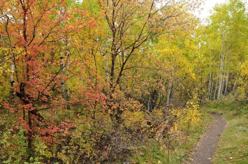 Fall Foliage on City Creek Trail in Pocatello _DSC1892.jpg