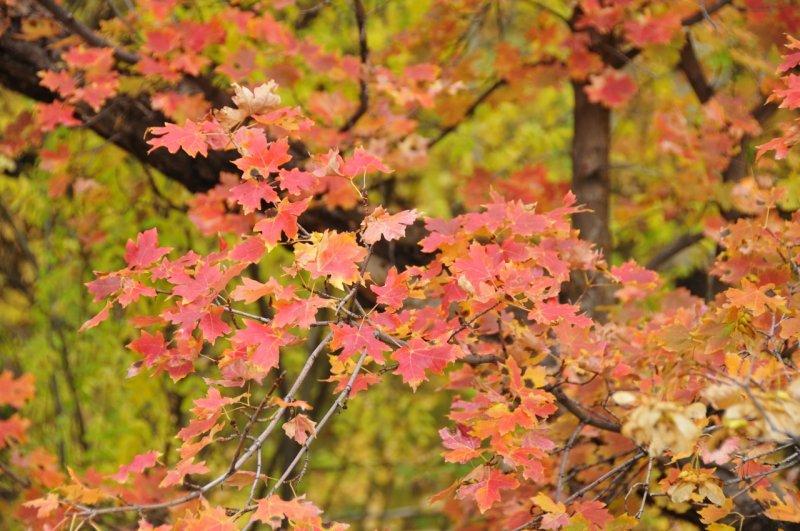 Fall Foliage on City Creek Trail in Pocatello _DSC1895.jpg