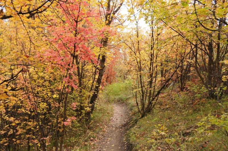 Fall Foliage on City Creek Trail in Pocatello _DSC1906.jpg