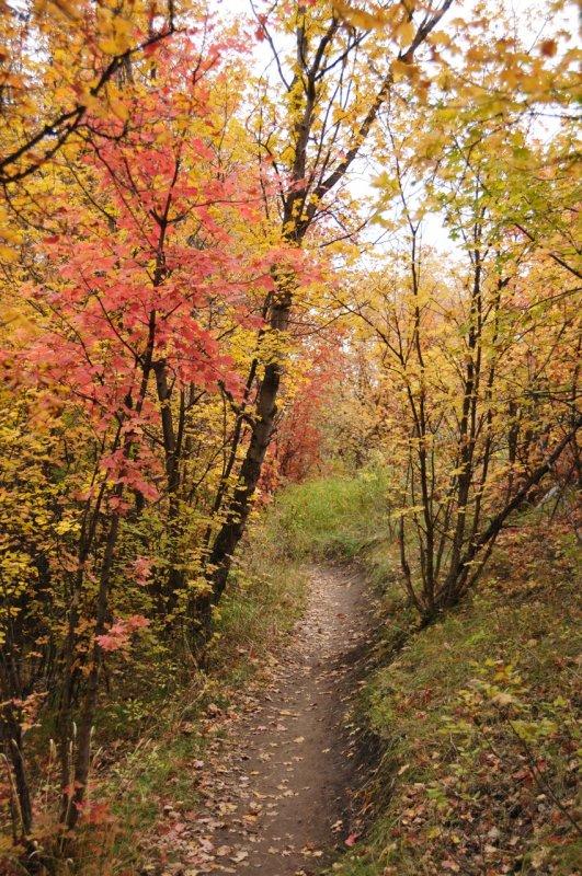 Fall Foliage on City Creek Trail in Pocatello _DSC1919.jpg