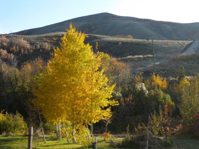 Pocatello Country Autumn Scene IMG_0242.jpg