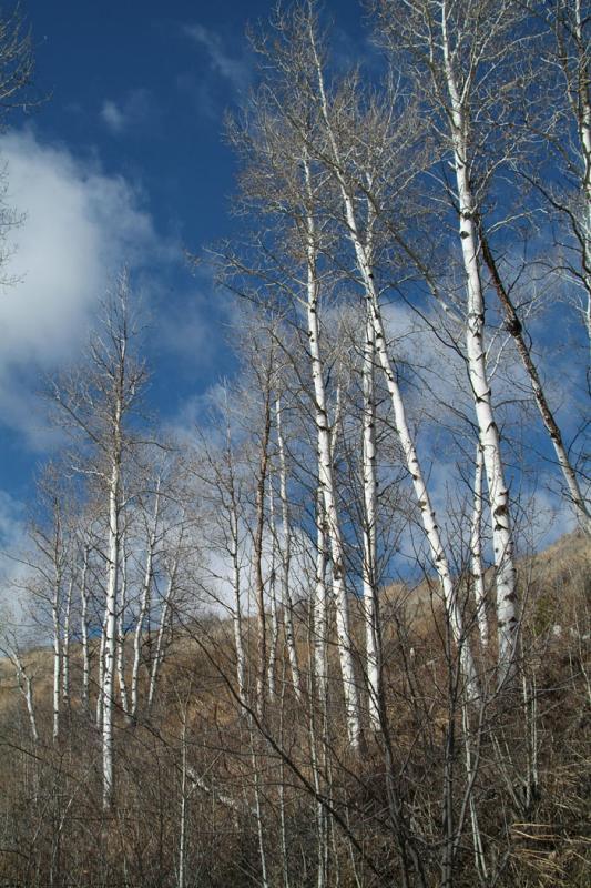 Aspen in November in the Mountains DSCF0059.jpg
