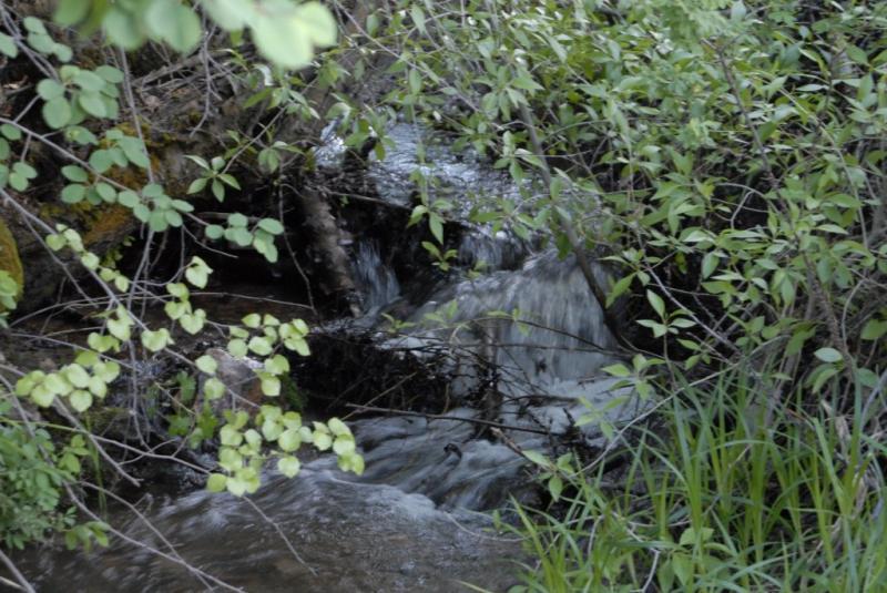 A City Creek Waterfall -- Late May _DSC0237.JPG
