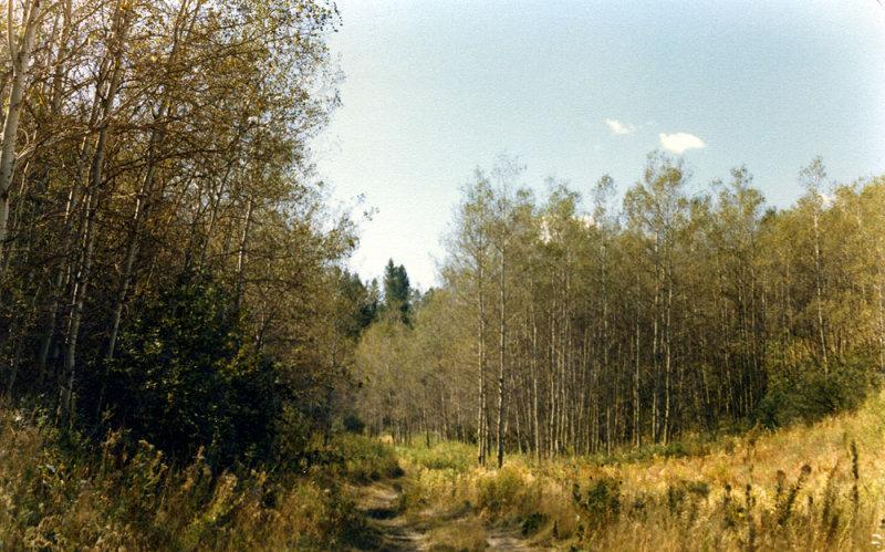 Trail smallfile.jpg