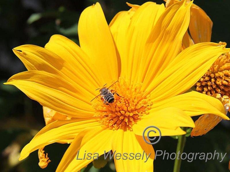 Bee loving Yellow