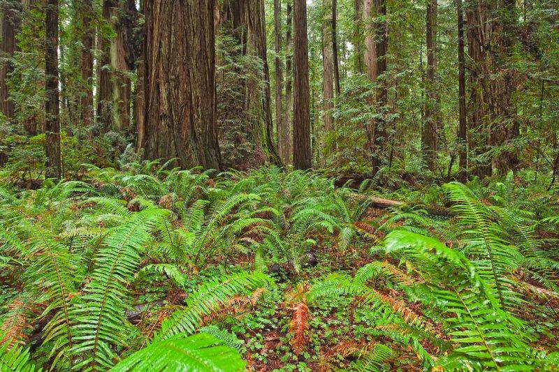 Steady Rain on the Forest Floor