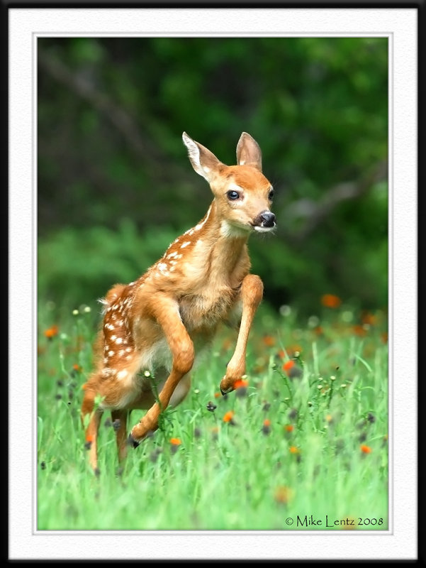 Fawn bounds