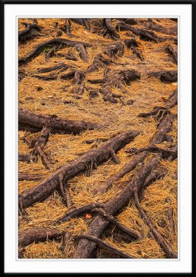 Roots and needles