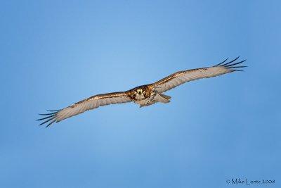 Redtail Hawk eyes on me