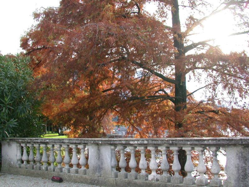 Bellagio, Villa Melzi gardens