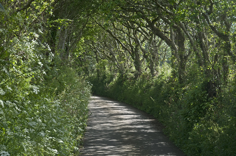 A Country Road In Cornwall