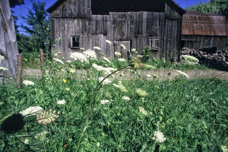 The Farm, Dunville, Ontario - 11