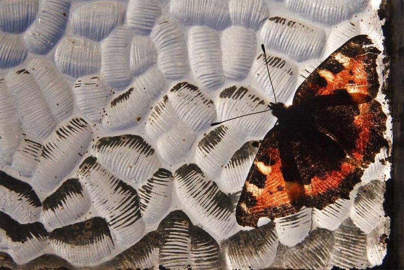 Winter Butterfly