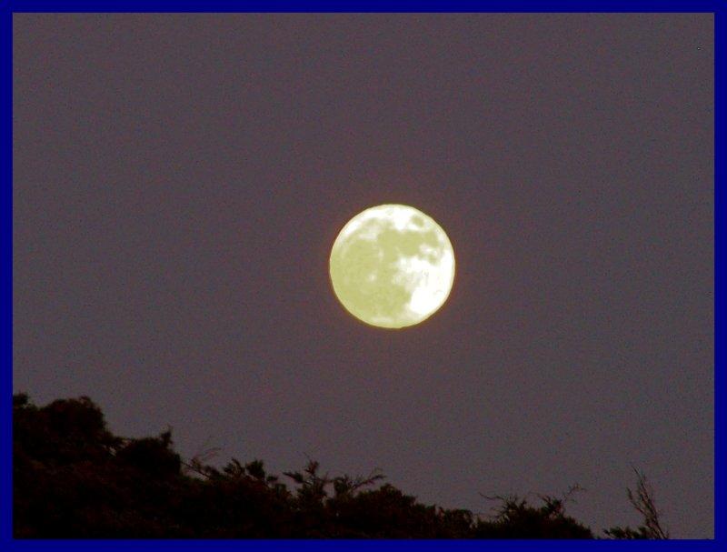 summer  moon in the City.jpg