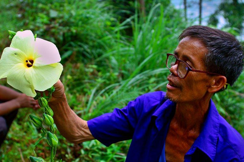 0004 Long Xian Qian showing a Malvaceae flower.