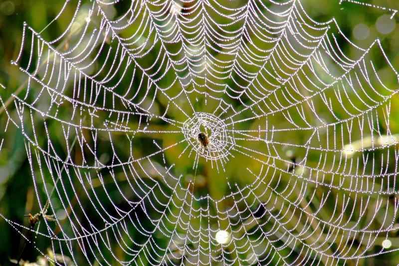 236  SPIDER WEB