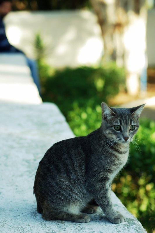 Cats of Tunisia