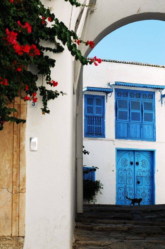 Cats in Tunisia