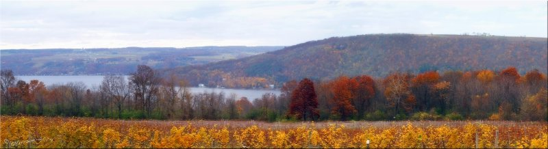 Keuka Lake from Across the Vines