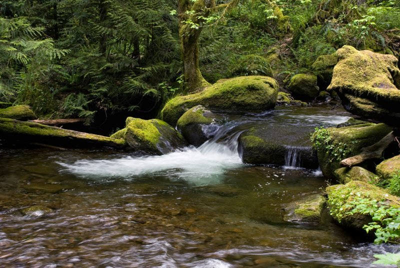 Multnomah Creek #2  2008