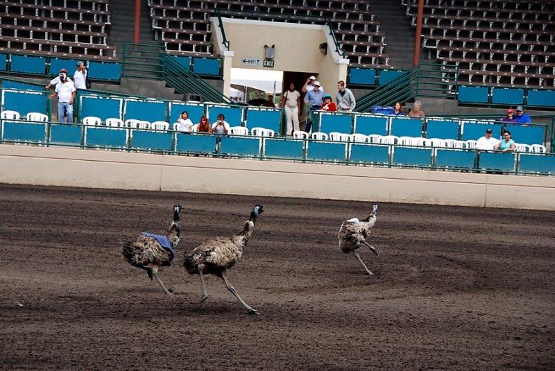 Emu races