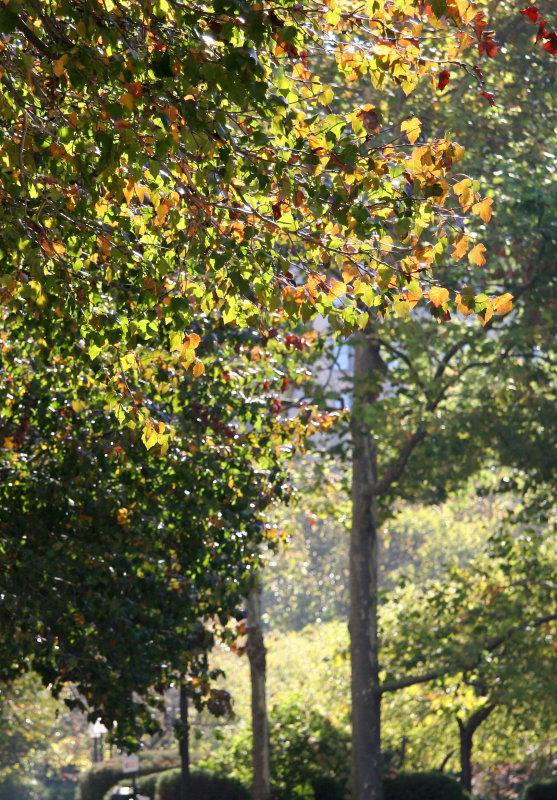 Garden View - Hawthorne Foliage Highlighted