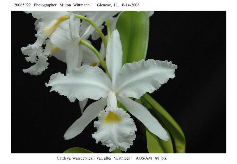 20085922 - C. warscewiczii var. abla  Kathleen  AM/AOS  88pts.