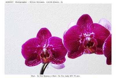 20085907 - Dtps. Suprairies Beautiful Lady Sunprairie  HCC /AOS  78 pts.