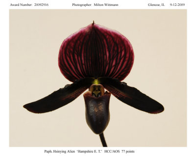 20092916  -  Paph. Hsinying Alien Hampshire E. T.  HCC AOS 77 points.