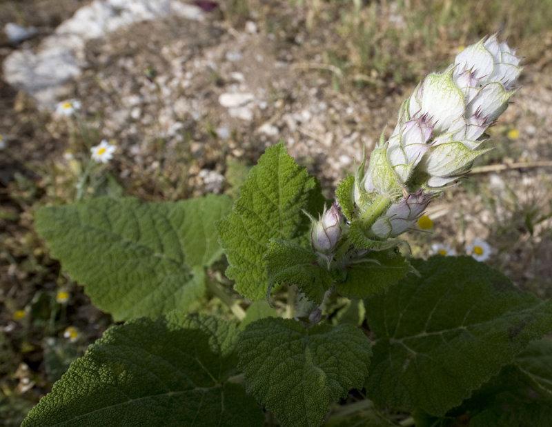Aizanoi june 2008 2296.jpg