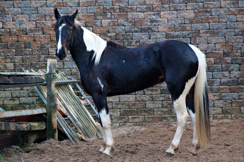 3 year-old Filly
