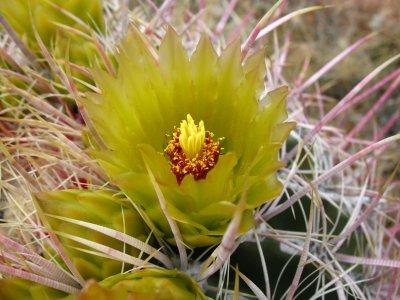 barrel flower.jpg