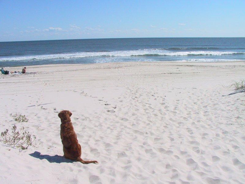 Amber watches the ocean!.jpg