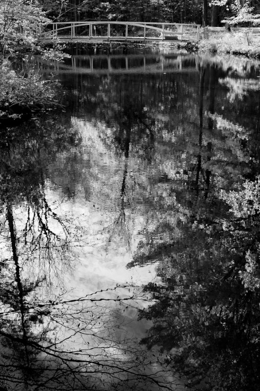 Birdsacre Pond Bridge #7 b&w