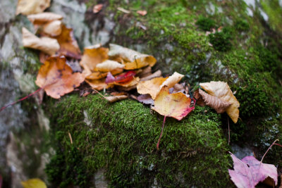 Fallen Leaves on Mossy Rock