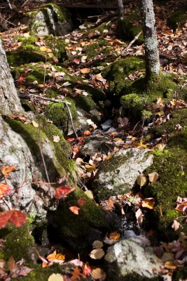 Leaves in Little Stream #2