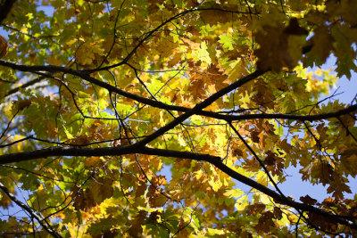 20091017-_MG_3859-2.jpg