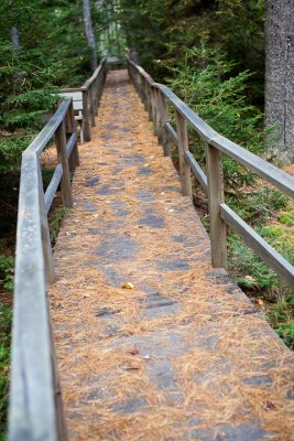 Birdsacre Boardwalk #4