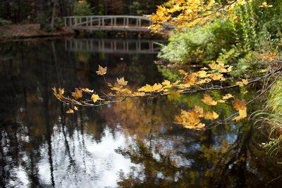Birdsacre Pond Bridge #6